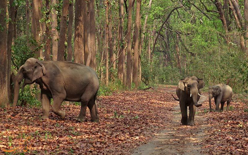 پارک ملی جیم کوربت هند دسترسی