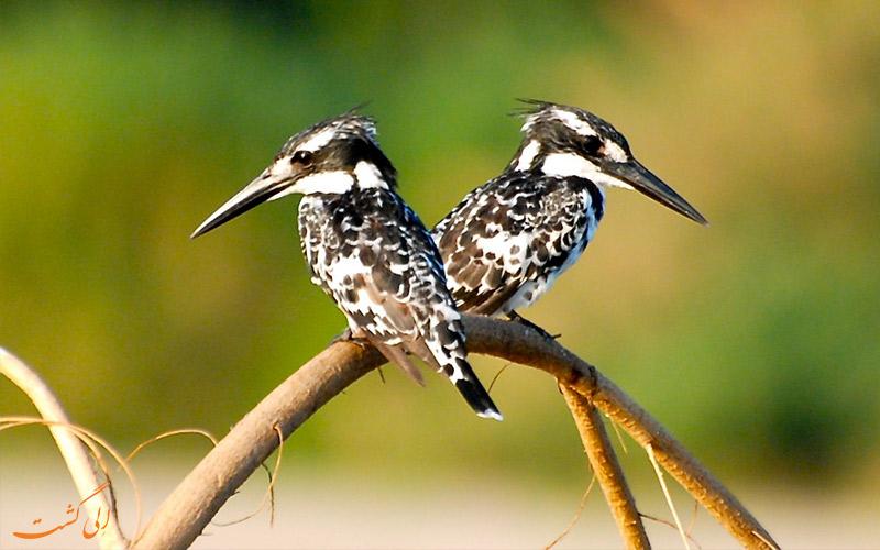 پرندگان هند و محل زندگی-پارک