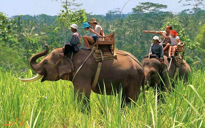 پارک ملی جیم کاربوت هند-فیل سواری