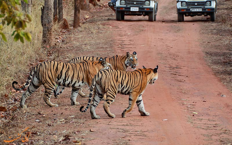 پارک ملی جیم کاربوت در هند