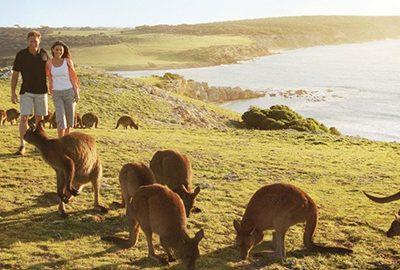 جزیره کانگورو در استرالیا