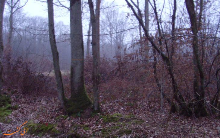جنگل فریاد درینگ