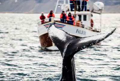 خلیج دینگل بی ایرلند-الی گشت