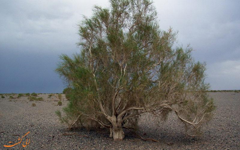 گیاهان بیابانی ایران