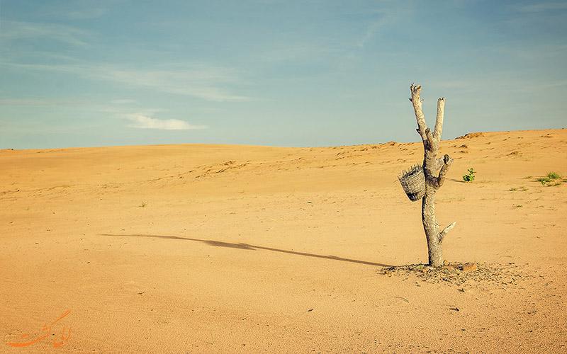 محیط زیست درون صحرا