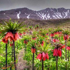 منطقه حفاظت شده گلستان کوه خوانسار