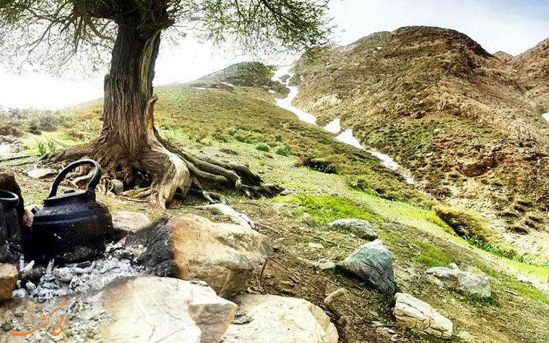 پوشش گیاهی گلستان کوه