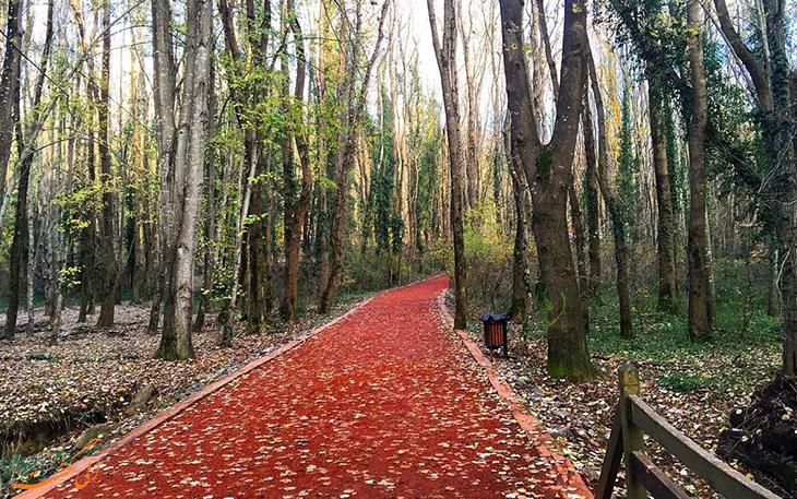 پاییز در جنگل بلگراد در استانبول