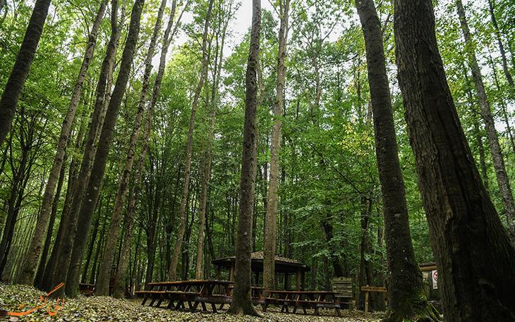 جنگل بلگراد در استانبول