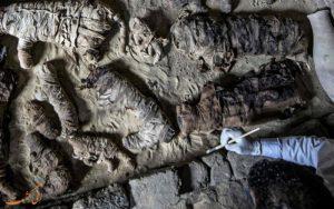 کشف شگفت انگیز گربه های مومیایی شده در قبری 6 هزار ساله در مصر!