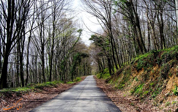 جاده ی جنگل بلگراد در استانبول