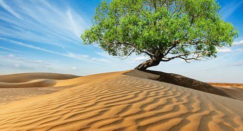 معروفترین درختان