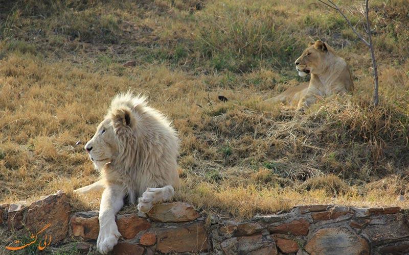 حیوانات آفریقایی