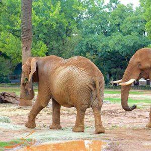 باغ وحش ملی آفریقای جنوبی-الی گشت