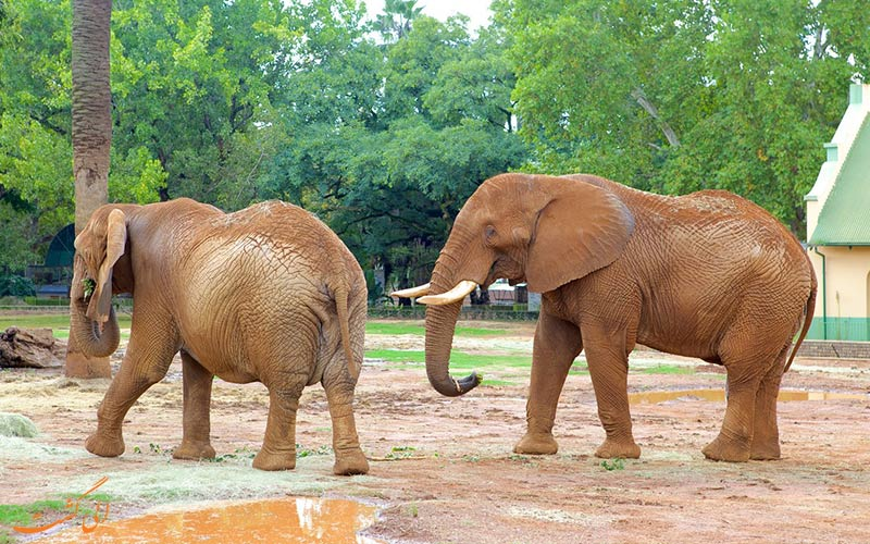 باغ وحش ملی آفریقا در پروتوریا