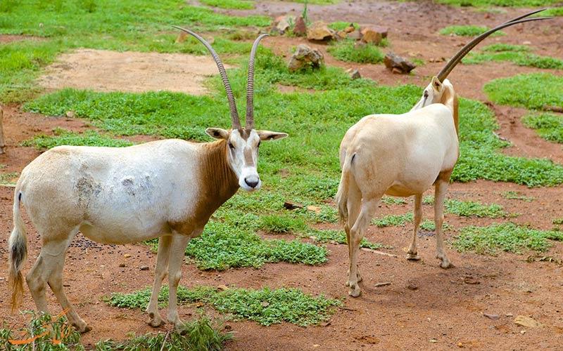 باغ وحش ملی آفریقای جنوبی