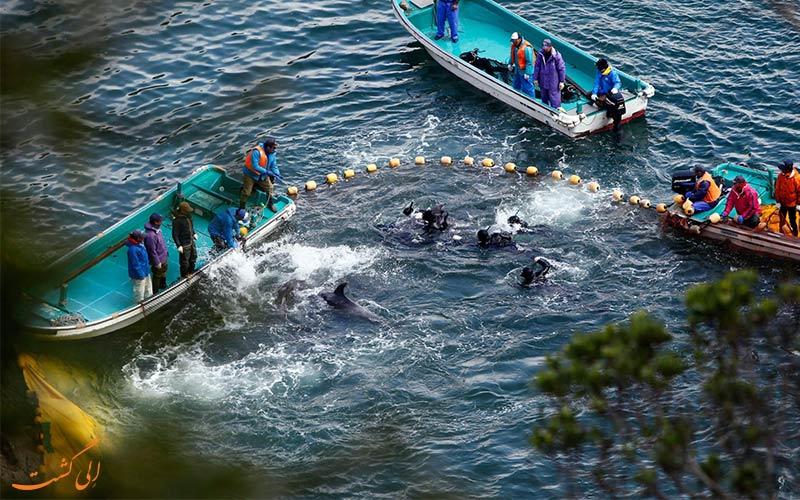تایجی و کشتن دلفین ها