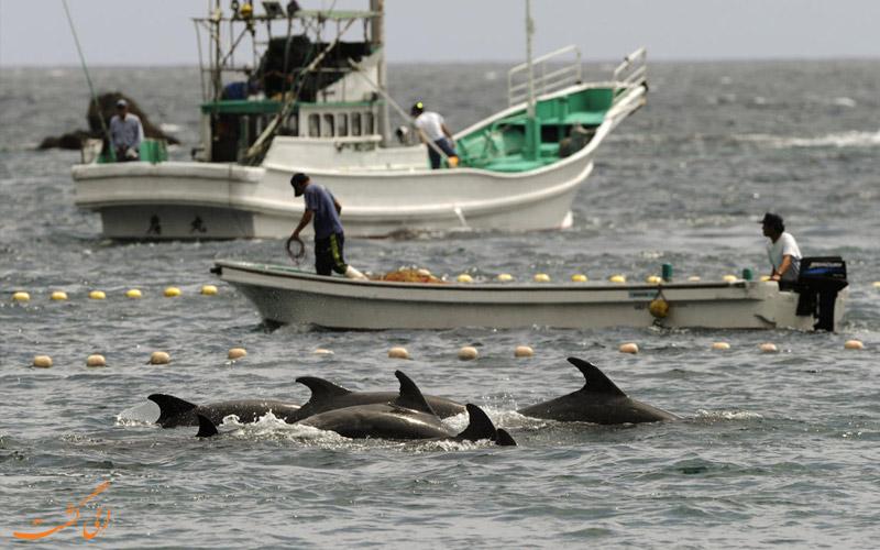 شکار دلفین ها و نهنگ ها در ژاپن