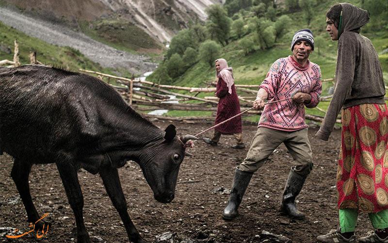 شغل مردم یاقنوبی تاجیکستان