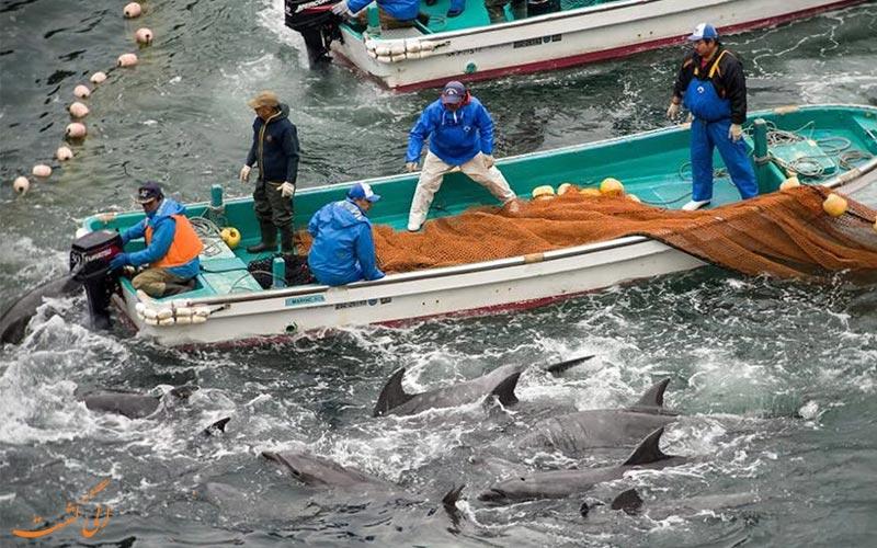 نحوه شکار دلفین ها در تایجی ژاپن
