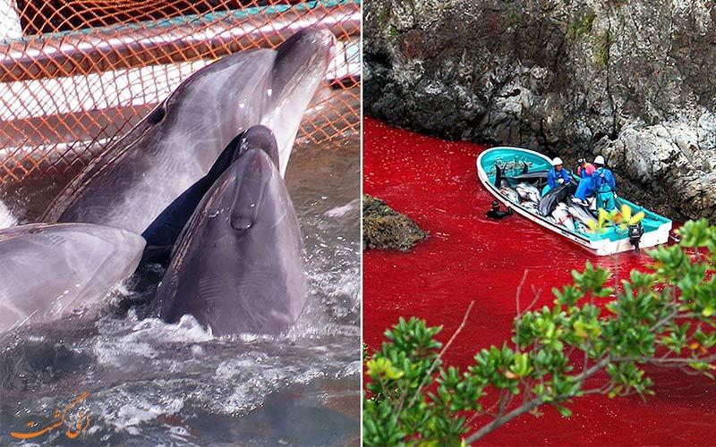 کشتار دلفین ها در تایجی ژاپن