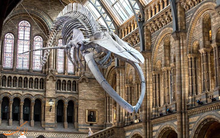 بخش های مختلف موزه تاریخ طبیعی