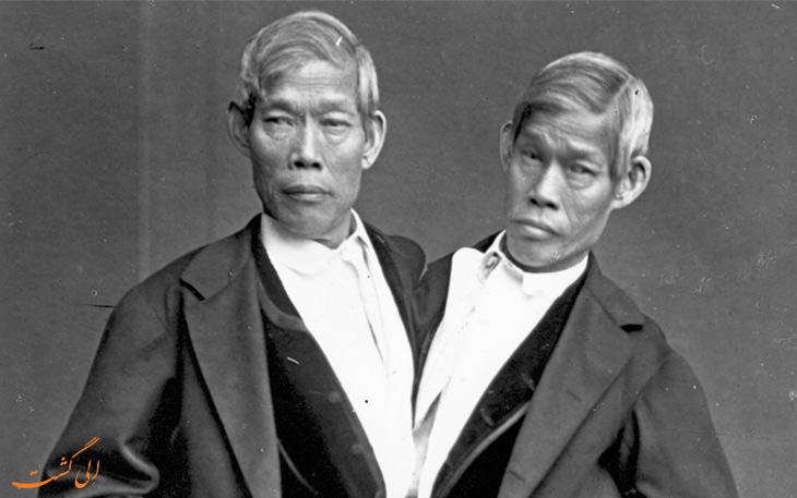 دوقولوهای سیامی تایلند