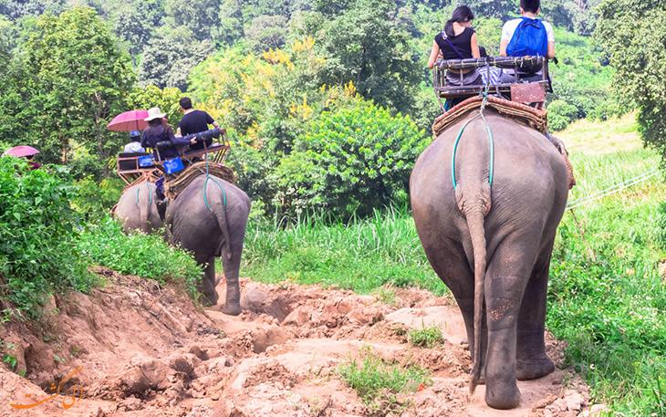 قیل سواری در تایلند