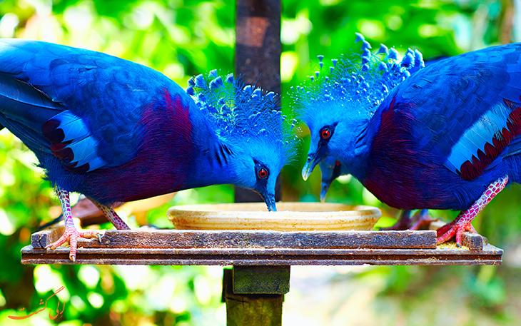 پرندگان رنگارنگ در کوالالامپور