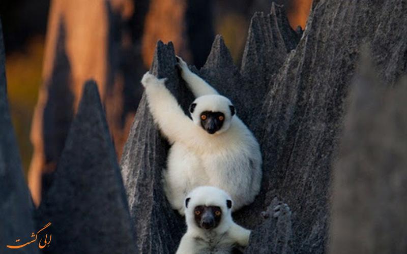محیط زیست ماداگاسکار