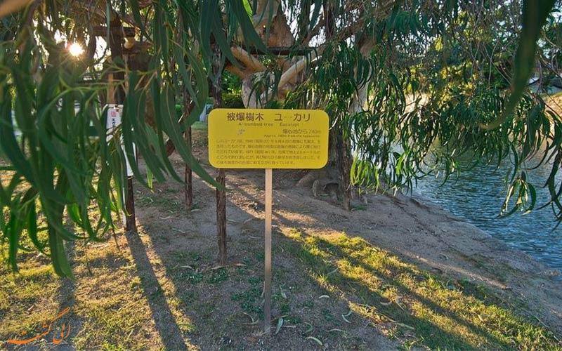درختان اکالیپتوس-بازماندگان بمب اتمی هیروشیما