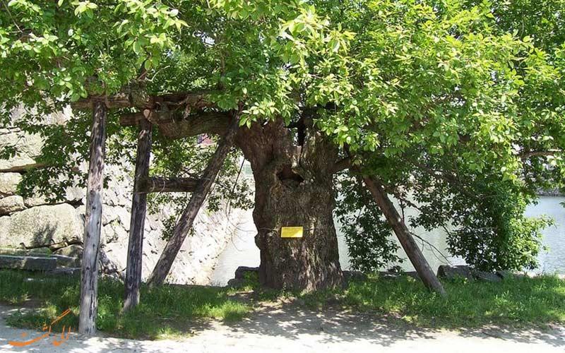 درخت بید-بازماندگان بمب اتمی هیروشیما