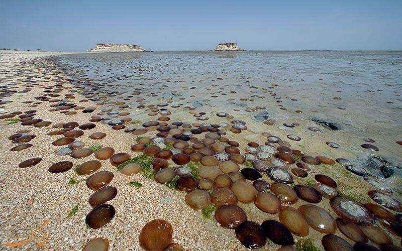 سواحل بکر-راهنمای سفر به جزیره هندورابی
