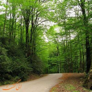 ورودیه رایگان پارکهای جنگلی