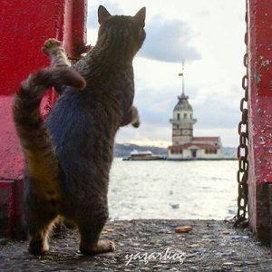 گربه های شهر استانبول