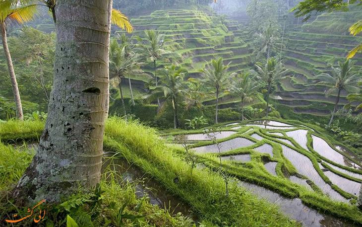 حقایقی از اندونزی در خصوص گونه های گیاهی و جانوری
