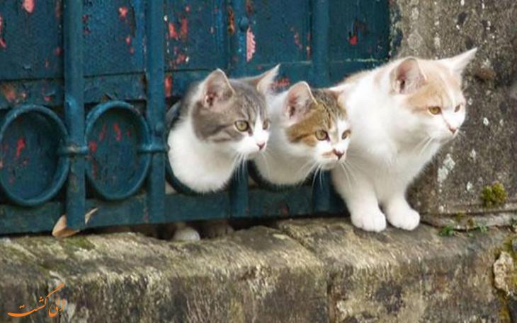 چند لحظه با گربه های استانبول