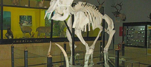 امروز فرصتی برای بازدید رایگان از موزه ی تنوع زیستی!