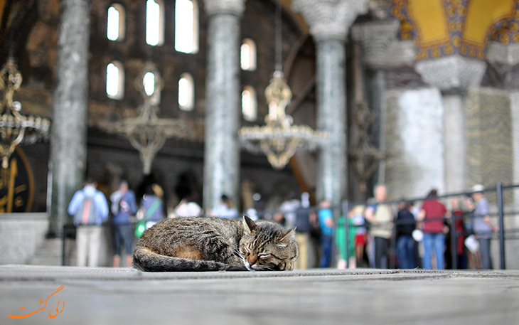 گربه های استانبول