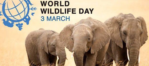 همه چیز درباره ی روز جهانی حیات وحش و حیوانات در حال انقراض ایرانی