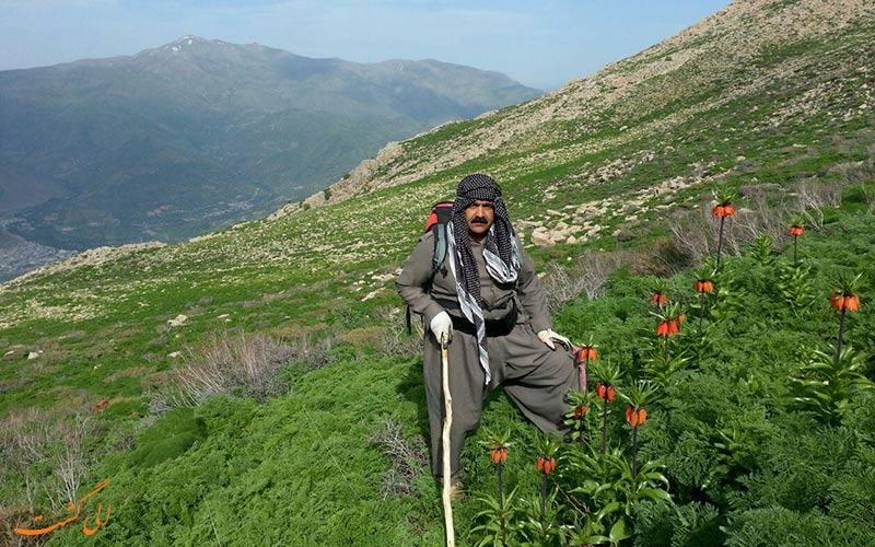 کوه های کردستان