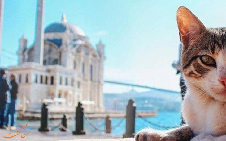 زندگی گربه های استانبول