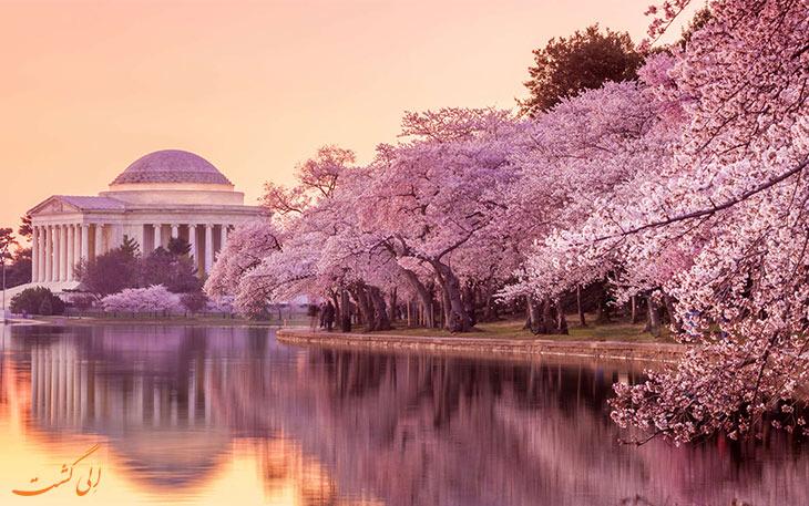 فستیوال ملی شکوفه گیلاس واشینگتن