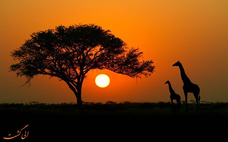 طبیعت آفریقا