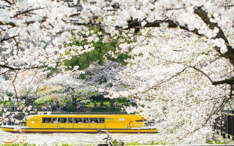 قایق سواری زیر شکوفه ها
