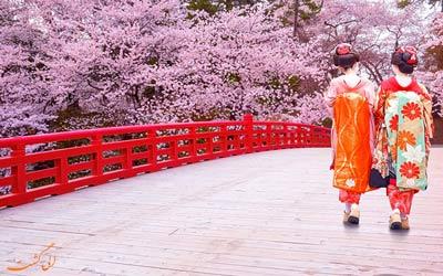جشن شکوفه های گیلاس ژاپن