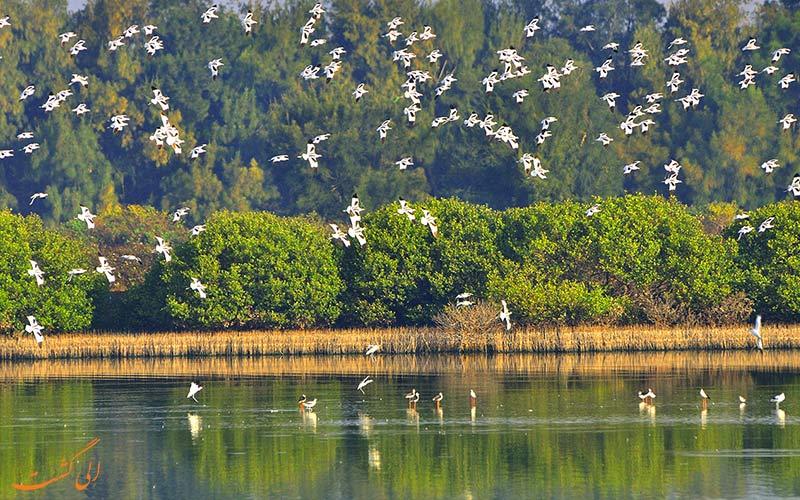 تالاب های طبیعی محیط زندگی پرندگان مهاجر