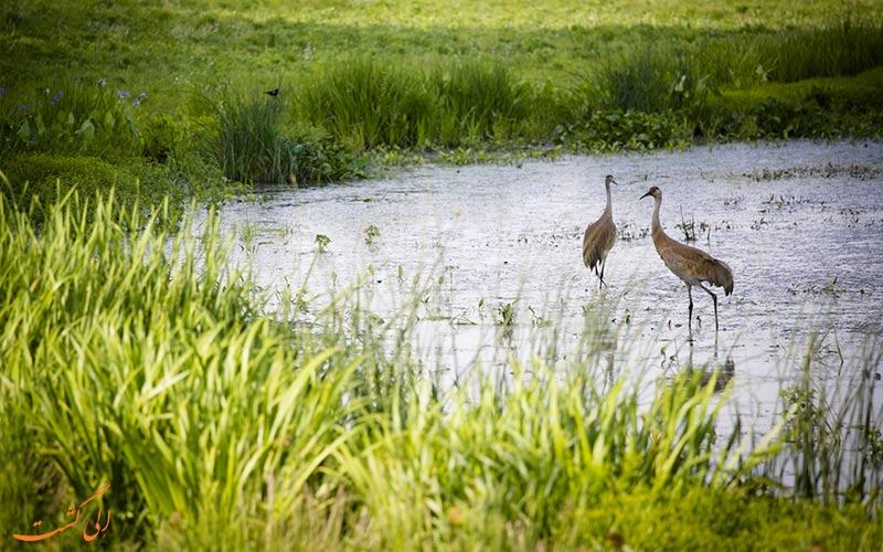 فواید تالاب های طبیعی برای پرندگان