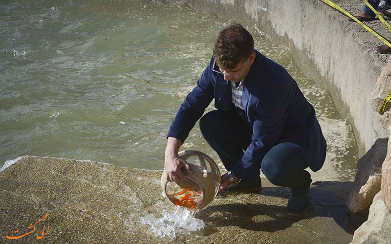 هشدار رهاسازی ماهی قرمز