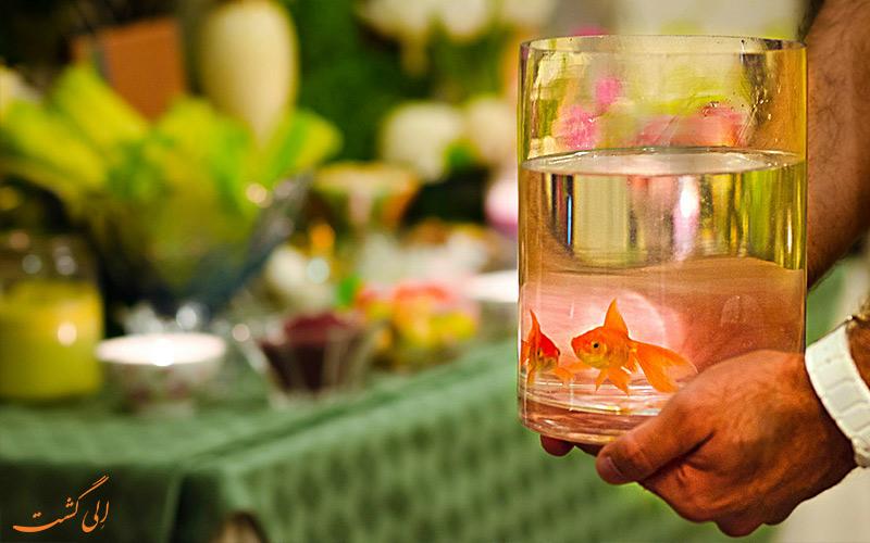 هشدار رهاسازی ماهی قرمز-عمر ماهی قرمز
